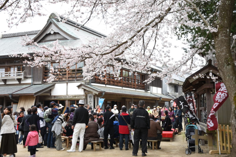 Doramu no Sato Sakura Festival