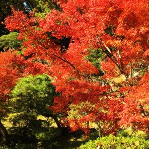 event_autumn